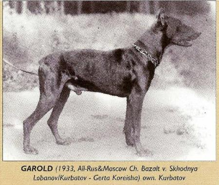 Garold (own. Kurbatov)